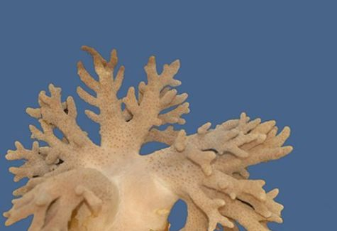 Soft Finger Leather Coral