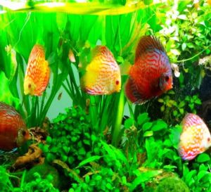 Assorted Color Mix Discus