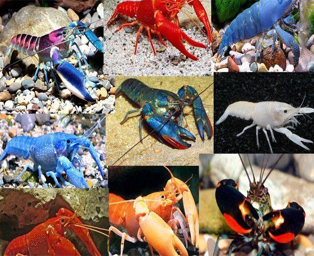 Lobster Assortment Packs