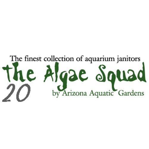 The Algae Squad20