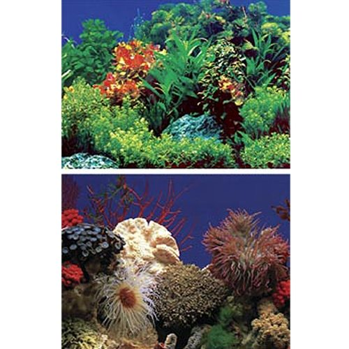 Amazon Waters Coral Reef Aquarium Background