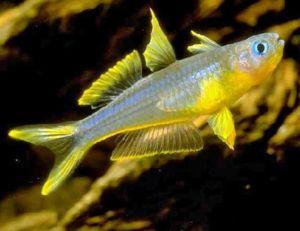 Aquarium fish plants accessories arizona aquatic gardens for Fish stores in arizona