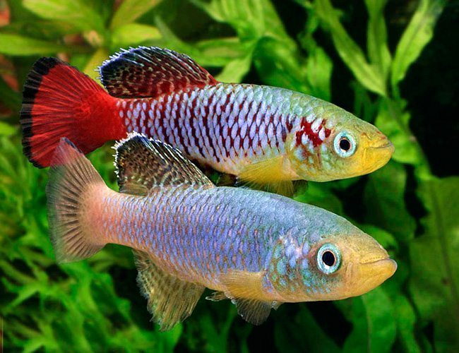 Fish names in alphabetical order page 7 forum games for Girl fish names