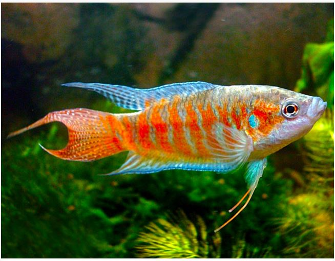 Fish Names In Alphabetical Order Page