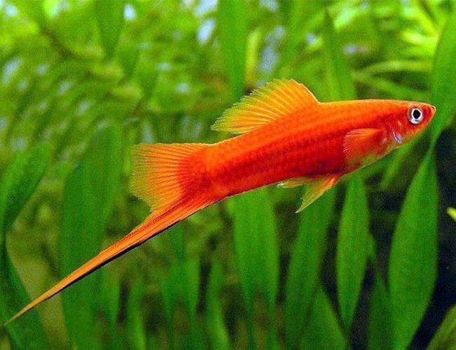 دنیای ماهی