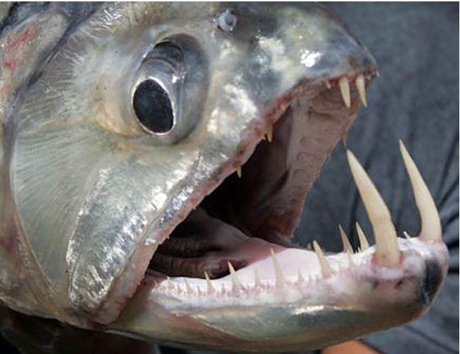 Do Smooth Dog Fish Sharks Eat Crab