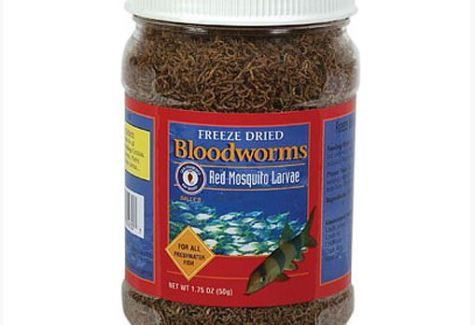 San Francisco Bay Brand Bloodworms