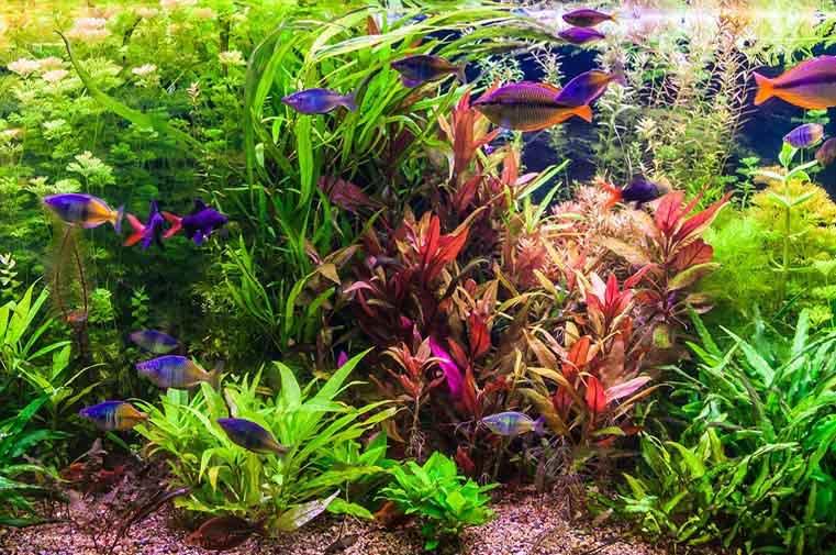 Arizona Aquatic Gardens