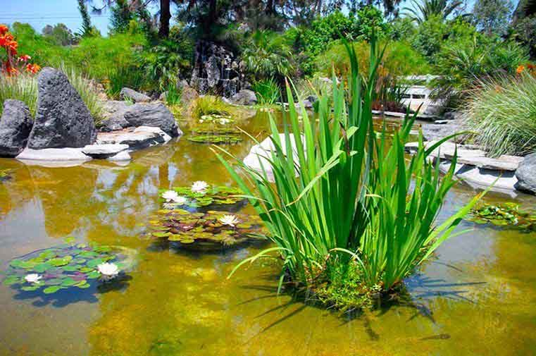 Massive Aquatic Plant Selection