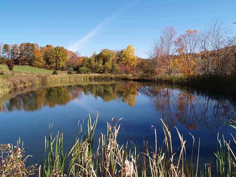 Lake & Pond Algae Control Solutions