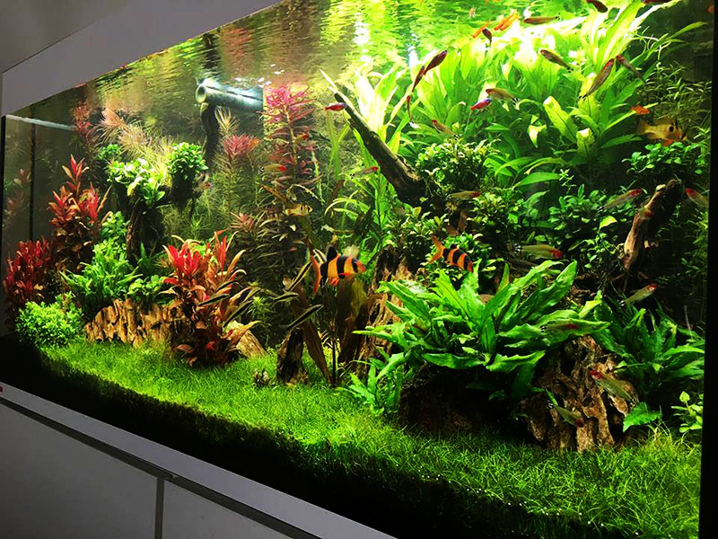 Aquarium Fish Plants Accessories Arizona Aquatic Gardens