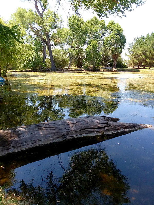 Pond Algae solutions, cattle ponds, water retention ponds