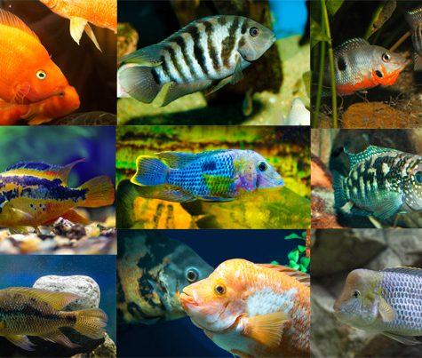 Aquarium Fish, Plants & Accessories - Arizona Aquatic Gardens