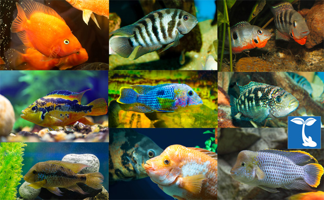 Buy Colorful Tropical Fish Online & Exotic Freshwater Fish for Sale