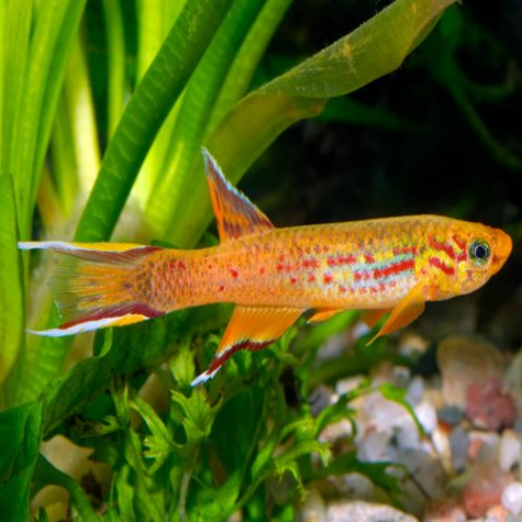Buy Colorful Tropical Fish Online & Exotic Freshwater Fish